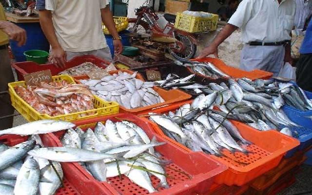 poisson اسماك سمك حوت